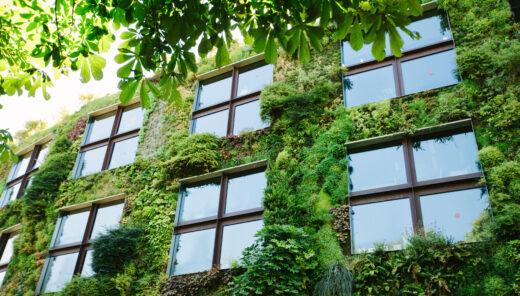 Grønn vegg, grønne planter omkranser vinduene i en bygård